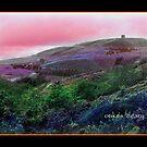 dream rivington by Carl deary