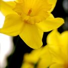 Yellow by Richard Pitman