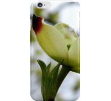 Dogwood Bloom - 4   ^ iPhone Case/Skin