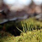 Green Carpet by Jennifer Potter