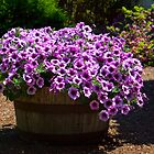 Barrel of Purple Petunias by Stacey Lynn Payne