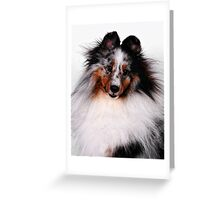 The Sheltie Greeting Card