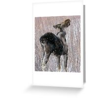 Mangy Moose Time of Year Greeting Card