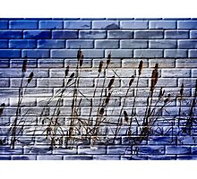 The Painted Wall Photographic Print