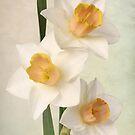 daffodils by OldaSimek