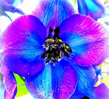 Delphinium Flower by ©The Creative  Minds