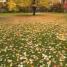 Ground covered with Autumn leaves , Toronto , Canada by alopezc72