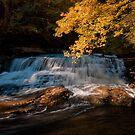 Autumn Shoal by Wendell Loggins