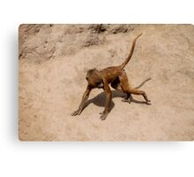 Chase Me Chase Me Canvas Print