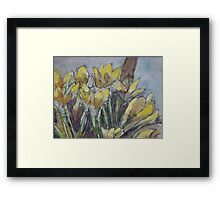 Daffodils in the morning sun Framed Print