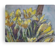 Daffodils in the morning sun Canvas Print
