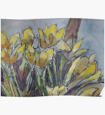 Daffodils in the morning sun Poster