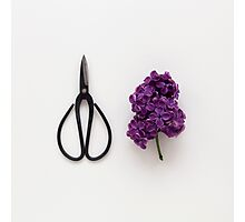 Lilac and Scissors Photographic Print