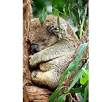 Sleeping Koala Photographic Print