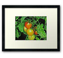 Tomatoes - Garden treat Framed Print