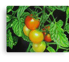 Tomatoes - Garden treat Canvas Print