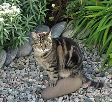 Sitting Pretty - Tabby Cat in a Rockery by BlueMoonRose