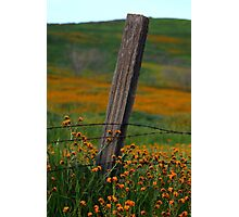 Old Fence Post and Spring Wildflowers Photographic Print