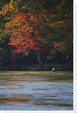 FISHING UNDER AUTUMN LEAVES by Wayne Hughes