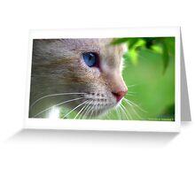 Kitten in Profile Greeting Card