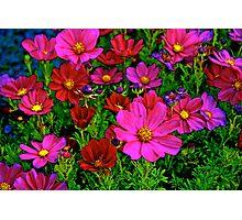 Springtime Photographic Print