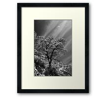 Here Is My Appeal Framed Print