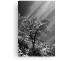 Here Is My Appeal Canvas Print
