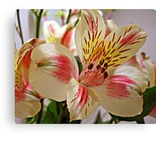 Is It Spring Yet? Canvas Print