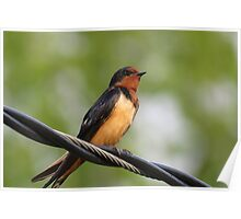 Bird Perched upon Wire Poster