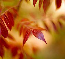 Red leaves  by drackar
