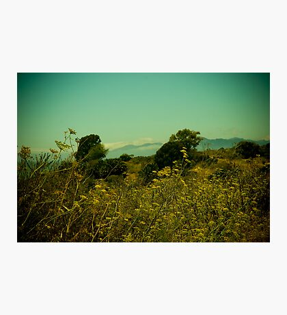 Fennel by the bay  Photographic Print