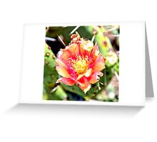 Red and Yellow Cactus Flower Bloom Greeting Card