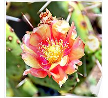 Red and Yellow Cactus Flower Bloom Poster