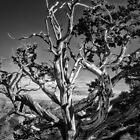 South Rim Grand Canyon Form by Jaime Martorano
