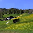 Spring in Austria  by annalisa bianchetti
