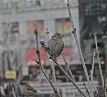 Bird in New York by Ashley Salazar