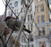 Bird in New York 2 by Ashley Salazar