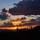Sonoran Sunset by Aaron  Cromer