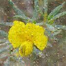Photo Impression :: Yellow Apophysis by Imageo