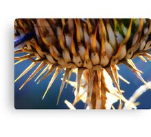 Spike the Plant Canvas Print