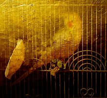 Gilded Cage by © Helen Chierego
