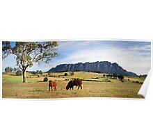 Rural Scenery- West Kentish,Tasmania Poster