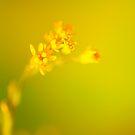 Inner Glow by duncandragon