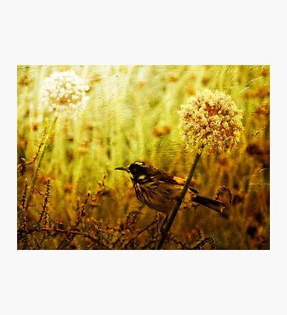 Tweets of Summer Photographic Print