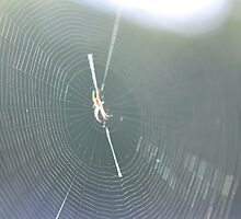 Webbed In The Morning Sun by MissyD
