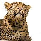 Leopard portrait by Ian Middleton