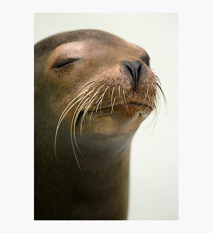 Seal portrait Photographic Print