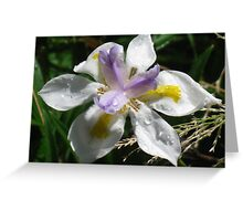 Earth Star Weeping in the Rain Greeting Card