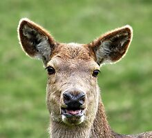 This is Jess the Deer by AnnDixon