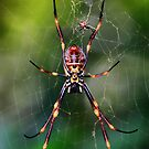 Golden Orb Weaver by Ann  Van Breemen